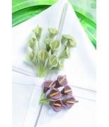 24 Bouquets de 6 arums